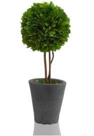 Scott Living 12 Luxe Natural Preserved Boxwood Topiary
