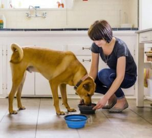 Extra Large Collapsible Dog Bowls - 2 Pack