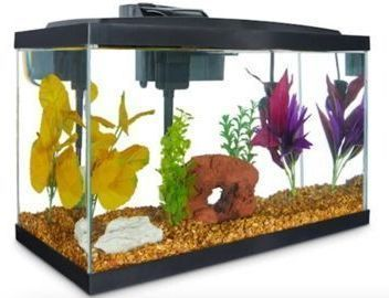 Aqueon Standard Glass 10 Gallon Aquarium Tank