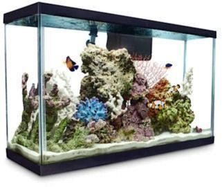 Aqueon Standard Glass Aquarium Tank (29 Gallon)