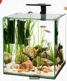 Aqueon Frameless 14 Gallon Cube Aquarium