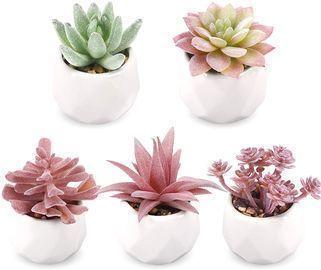 Artificial Succulent Plants -Set of 5