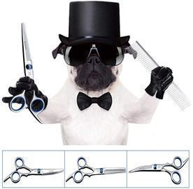 6 Inch Scissors For Dog Grooming
