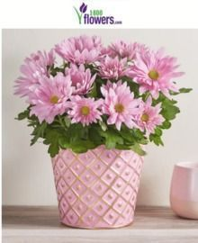 1800 Flowers - 20% Off Mother's Day Flowers