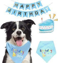 Pet Birthday Party Supplies