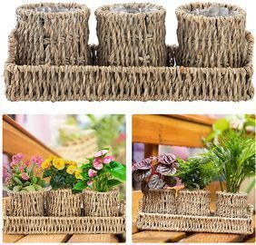 3 Pcs Herb Pot Planter with Tray