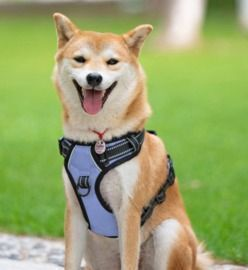 No Pull Reflective Dog Harness with 2 Leash Attachments and Easy Control Handle (Size Large)