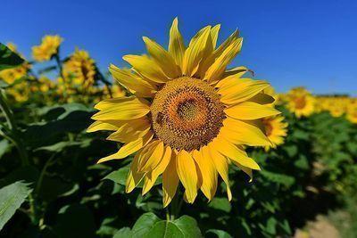 DIY 5D Diamond Painting Sunflower by Number Kit