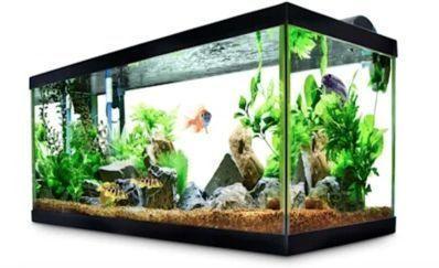 40-Gallon Aqueon Standard Open Glass Aquarium Tank