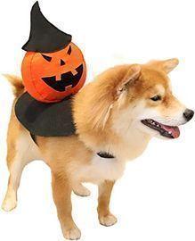 Besfan Dog Halloween Costume