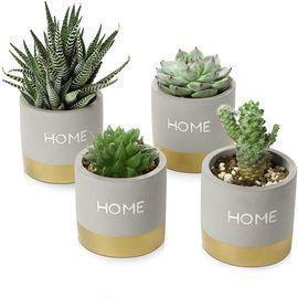 Set of 4 3 Succulent Planters