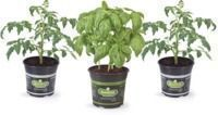 Home Depot - 3 for $12 Bonnie 1 Gal. Vegetables & Herbs (In-Store)